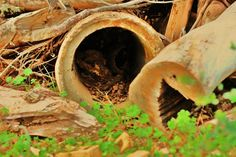 An old pile of discarded wood & culverts on Daddy's property.