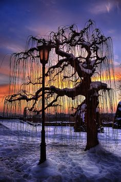 Sunset tree in snow, Belgrade, Serbia Beautiful Foto Nature, All Nature, Beautiful World, Beautiful Places, Beautiful Sunset, Beautiful Pictures, Tree Forest, Belle Photo, Mother Nature