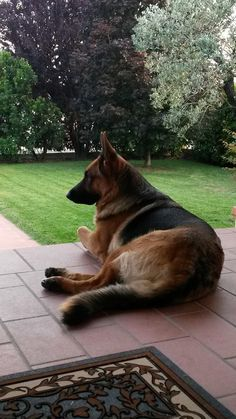 Click visit site and Check out Cool German Shepherd T-shirts. This website is top-notch. Tip: You can search your name or your favorite shirts at search bar on the top.