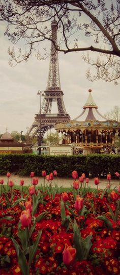 Paris, France                                                                                                                                                     More #exoticflowersfrance