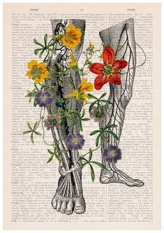 1000+ images about Beautiful Anatomy on Pinterest | Anatomy ...