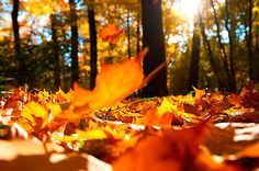 Folhas alaranjadas caindo. Estação do Outono. Clima de outono. Decoração no outono.