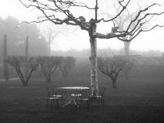 The morning mists envelop the garden and muffle any sounds…