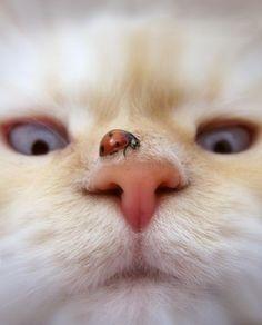 Photo (ZsaZsa Bellagio Tumblr)  - Catsincare.com