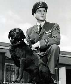 1955 Richard Todd as Guy Gibson in 'The Dam Busters'. Ww2 Veterans, Richard Todd, Film Man, Star Wars, War Film, Puppies And Kitties, Royal Air Force, British Actors, Great Stories