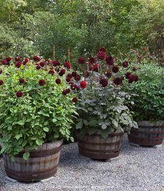 Thrilling About Container Gardening Ideas. Amazing All About Container Gardening Ideas. Container Plants, Container Gardening, Gardening Tips, Flower Planters, Garden Planters, Back Gardens, Outdoor Gardens, Plantar, Dream Garden