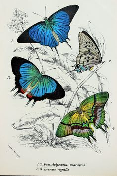 Beautiful Butterflies in Black Blue Green & Brown by PaperPopinjay, $10.00