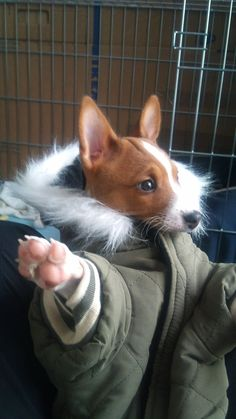 You told me if I put my coat on that I could go outside and play wif mah frens.