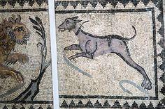 Un gran perro utilizado para la caza del león. Mosaico romano.