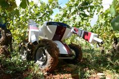 The Wall-Ye V.I.N. robot being used to harvest grapes in Burgandy vineyards. - This is a really interesting article and I do see the point but it definitely makes me sad to think that robots could be picking the grapes to make wine. Some things should really be done by hand and I think wine is one of those things. I worked at a vineyard and I know it's a lot of work but still there is something special about wine... What do you think?