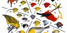 Rain Forest Birds: A Study In Adaptation - Hō'ike o Haleakalā Curriculum Old And New, Curriculum, March 21st, Rain, Study, The Unit, Birds, Forests, Teaching