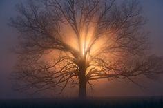 Sunrise and Fog, Cades Cove by Steve Zigler / 500px