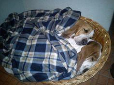 Basket hounds