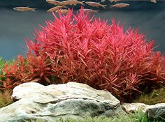 You have fish tank for indoor that's mostly called aquarium. Read Awesome Aquascaping Ideas You Will Totally Love Freshwater Aquarium Plants, Live Aquarium Plants, Planted Aquarium, Live Plants, Tropical Fish Store, Tropical Aquarium, Aquarium Fish Tank, Aquarium Set, Saltwater Aquarium