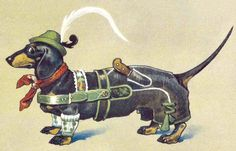 Ready for action! Dackel / dachshund DackelAzubi.jpg 1,459×934 pixels