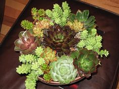 6 unique succulents to make this lovely arrangement.  Perfect for my patio table.