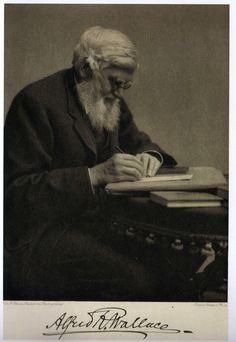 Retrato de Alfred Russel Wallace trabajando en su escritorio y firma.