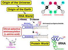 「RNA world」の画像検索結果