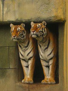 Peeking tigers