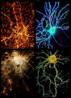 kambiz:    City lights and neurons show striking similarities to in these side-by-side comparisons by Infinity Imagined. The city light photos were taken aboard the International Space Station, while the neuron images were created with fluorescence microscopy.