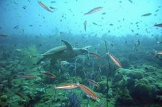 Queensland's resources boom is putting new stresses on the reef.