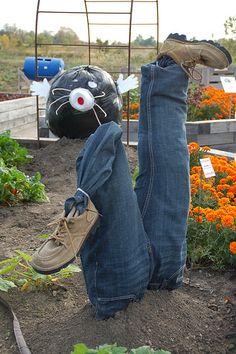 Photo by Connie Harclerode Scarecrows For Garden, Make A Scarecrow, Man Vs, Mole, Mole Sauce