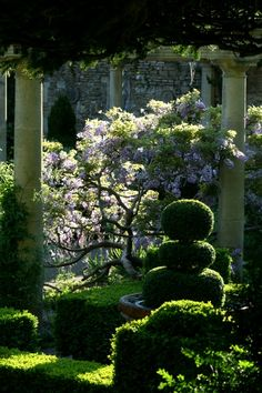 Idyllic Iford Love this combination of clipped yew and frothy foliage. And I want a wisteria tree!!