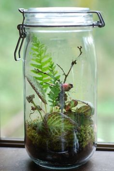 Canning jars are terrariums too!