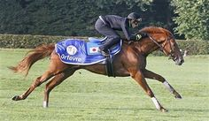 Christophe Soumillon rides Japanese horse Orfevre during a training session in Chantilly, west of Paris, Wednesday, Oct. 2, 2013. Orfevre wi...