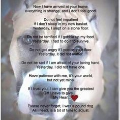Should be posted in every dog pound and everyone should be asked to read it before chosing a dog to take home  #love #photooftheday #me #instamood #cute #igers #picoftheday #girl #guy #beautiful #fashion #instagramers #follow #smile #pretty #followme #friends #hair #swag #photo #life #funny #cool #hot #bored #portrait #baby #girls #iphonesia