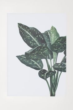 Poster - White/green plant - Home All   H&M US 1