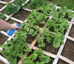 bug repellent for garden