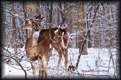 Deer in Winter Snow by muchobellasartes on Etsy