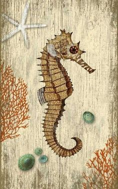 Suzanne Nicoll's vintage botanical image of a shy, mysterious seahorse swimming among red sea fans mixed with assorted aqua limpet shells and starfish.