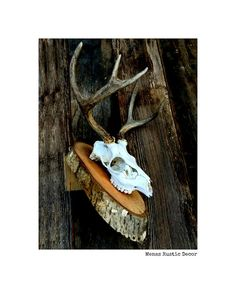 Black Tail Deer European Wall Mount Taxidermy  by MenasRusticDecor, $210.00