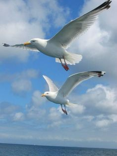 Όπου πετάς κι εγω δίπλα σου ❤️