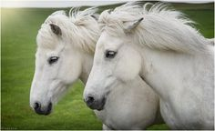 Horses II by Gustavo Rodríguez on 500px