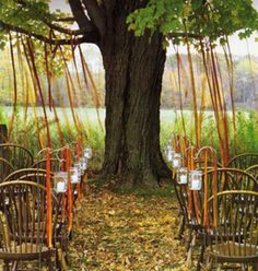 Ceremony Seating Tree Ribbons