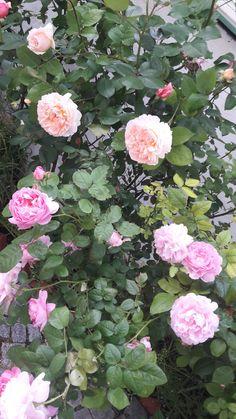 Floral Wreath, Farmhouse, Wreaths, Garden, Home Decor, Homemade Home Decor, Door Wreaths, Rural House, Garten