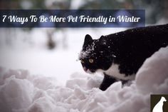 Ways you can help out fur friends who are outdoors this winter - http://go.homesalive.ca/dog-cat-learning-centre/bid/327378/7-Ways-To-Be-More-Pet-Friendly-in-Winter