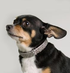 The Bling Collar   Show off the Bling! Our unique collars are made with the finest Italian leather.