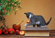 8 alimentos peligrosos para los gatos | EROSKI CONSUMER. Café, cebolla, vísceras de pescado y sal son comidas prohibidas para los felinos, ya que destruyen sus glóbulos rojos y les causan diarrea, intoxicaciones y puede que hasta la muerte