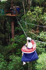 Tsitsikamma Canopy Tour - booked for 14 Dec! How To Speak French, Adventure Activities, Travel Companies, Travel Planner, Vacation Spots, Outdoor Activities, Canopy, South Africa, Tours