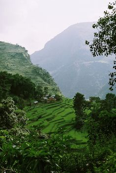 Rice cultivation Nepal Lower Himalayas - Terrace (agriculture) - Wikipedia