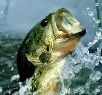 Best LARGEMOUTH BASS FISHING TIPS