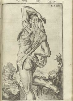 National Library of Medicine. Giulio Casserio (ca. Looking at anatomical illustration throughout History, from Medieval Medicine to Renaissance art Anatomy Drawing, Anatomy Art, Human Anatomy, Andreas Vesalius, Anatomy Illustration, Science Illustration, Illustrations Médicales, Medical Illustrations, Male Figure Drawing