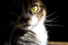Photograph Cat Eye by Frank Grey on 500px