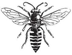 bee black and white - Google Search