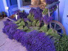 Lavender Store by johnfromks, via Flickr