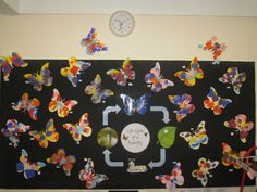Butterflies Life Cycle and Symmetry classroom display photo - Photo gallery - SparkleBox